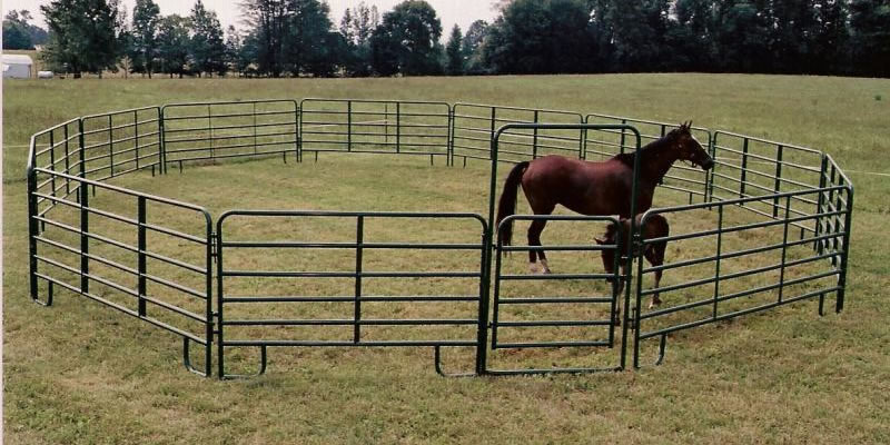 A big horse and a small horse standing on the ground. They are surrounded by the black coated fence and gate.